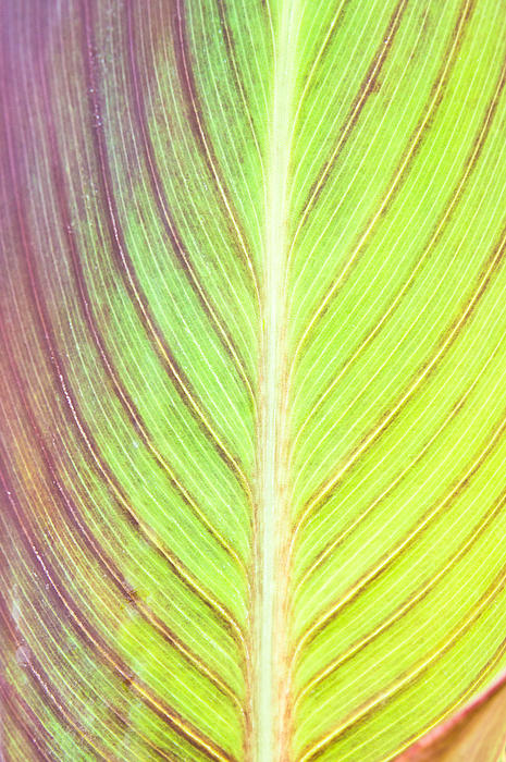 Leaf Detail Print by Tom Gowanlock