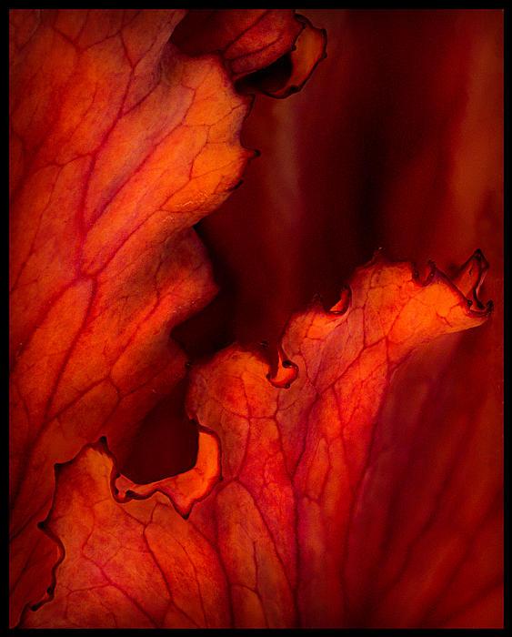 Kasandra Sproson - Leaves of Fire