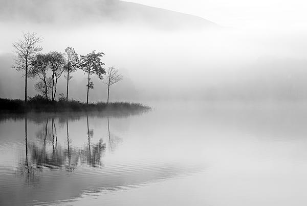 Loch Ard Trees In The Mist Print by Grant Glendinning