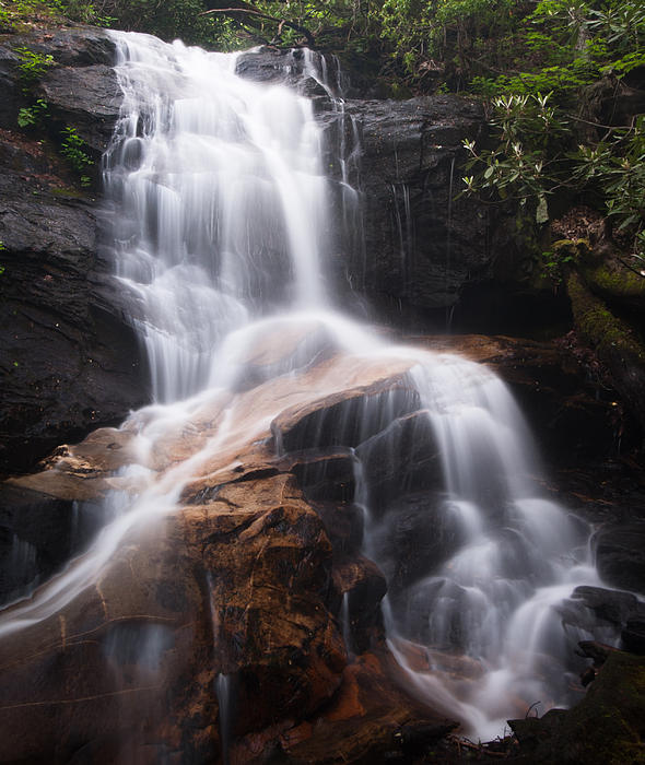 Log Hollow Falls Print by Phyllis Peterson