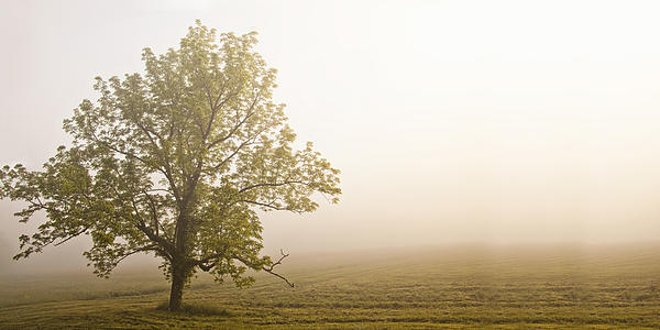 Lost In The Fog Print by Andrew Soundarajan