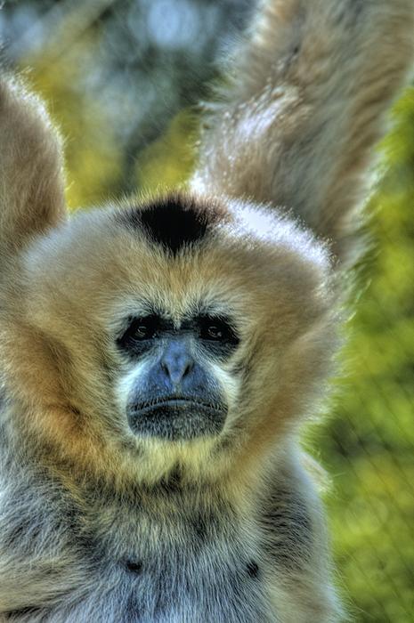 Monkey Print by Bryan Hanson