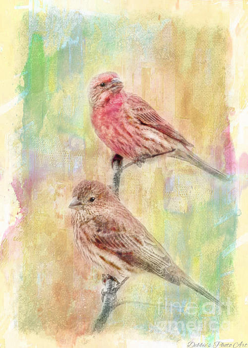 Mr And Mrs House Finch - Digital Paint Print by Debbie Portwood