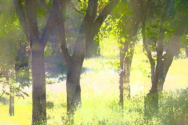 Oaks 25 Print by Pamela Cooper