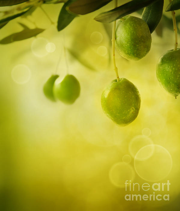 Olives Design Background Print by Mythja  Photography