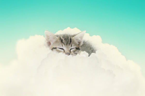 On Cloud Nine Print by Amy Tyler