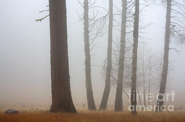 Out Of The Fog Print by Mike  Dawson