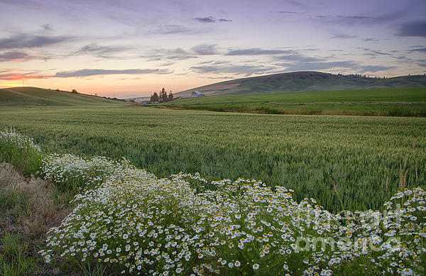 Idaho Scenic Images Linda Lantzy - Palouse Wildflowers