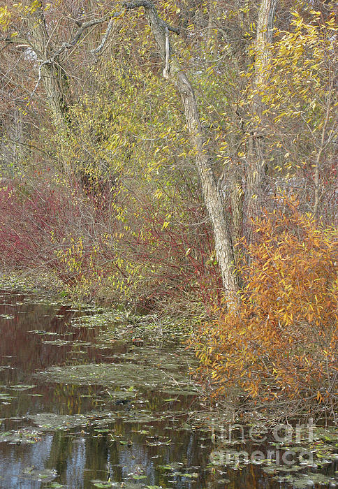 Ann Horn - Pondside Pastel