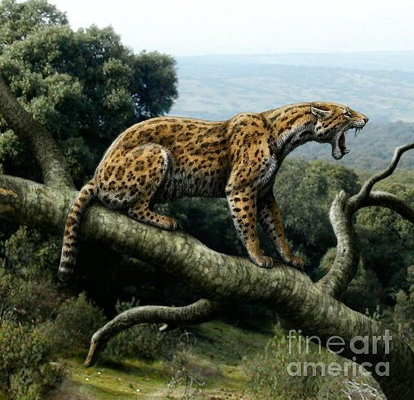 Promegantereon Sabretooth Cat Print by Mauricio Anton