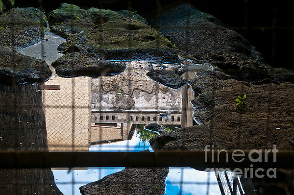 Reflections Print by Marion Galt