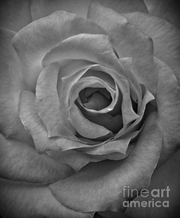 Chalet Roome-Rigdon - Rose Macro BW