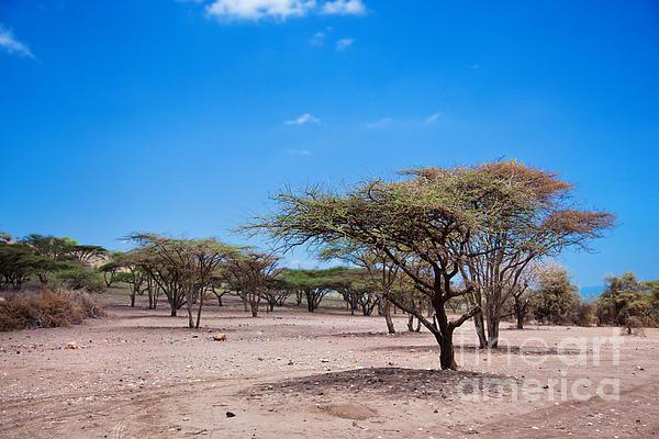Savannah landscape in tanzania by michal bednarek for Landscaping rocks savannah ga