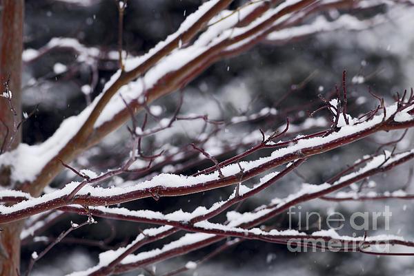 Snowfall And Tree Print by Elena Elisseeva