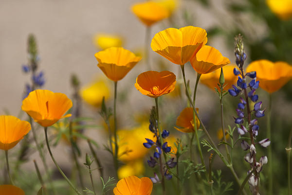 Saija  Lehtonen - Spring Wildflower Bouquet