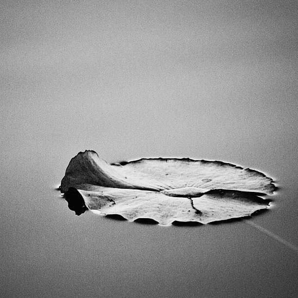 Stillness  Print by Scott Pellegrin