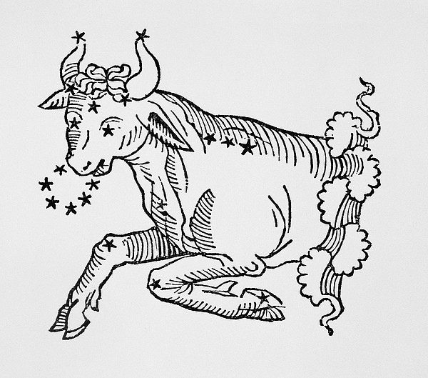 Taurus An Illustration Print by Italian School