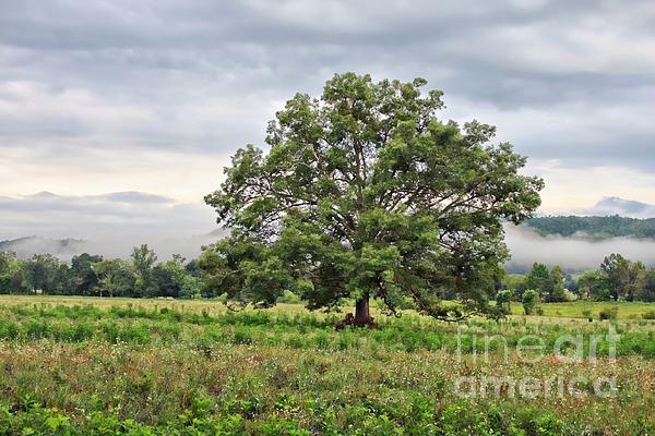 The Tree Print by Geraldine DeBoer