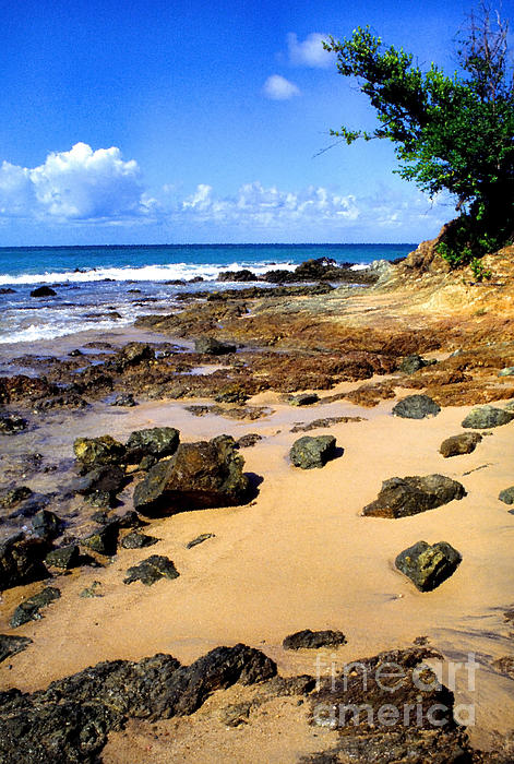 Vieques Beach Print by Thomas R Fletcher