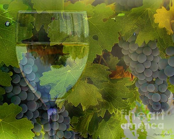 Wine Print by Stephanie Laird
