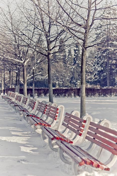 Winter Print by Ana Todor