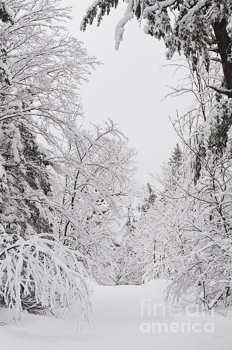 Winter Road Print by Cheryl Baxter