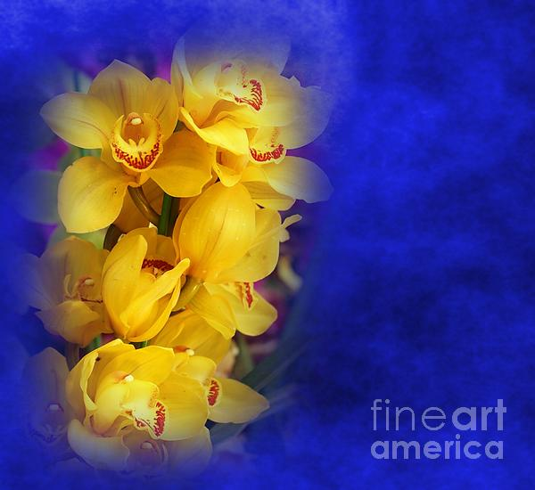 Yellow Butterfly Orchids Print by Yali Shi Yellow Butterfly Orchid