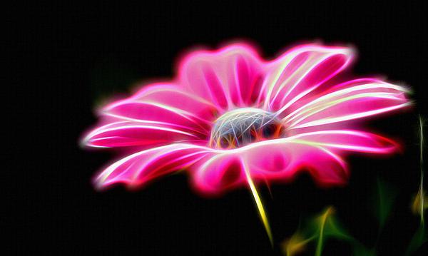 Michael Vicin - Flowers in Digital Art
