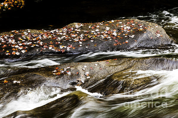 Williams River Autumn Print by Thomas R Fletcher