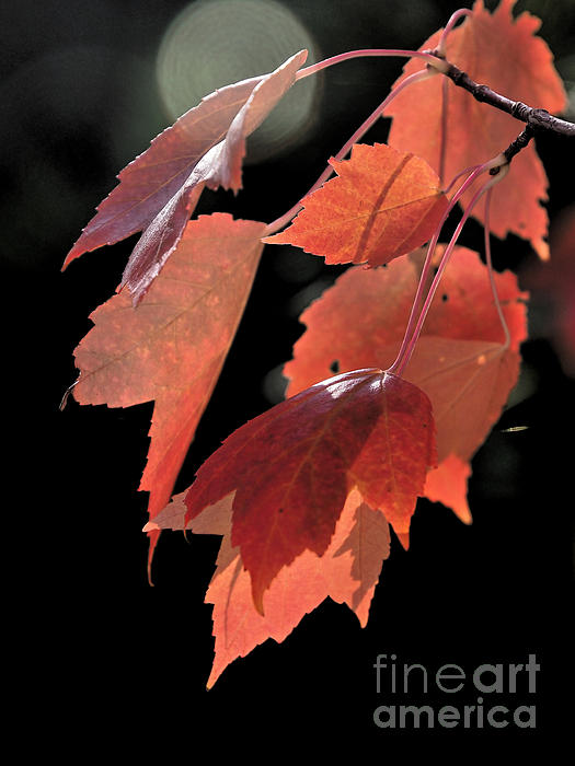 Autumn Leaves Print by   FLJohnson Photography