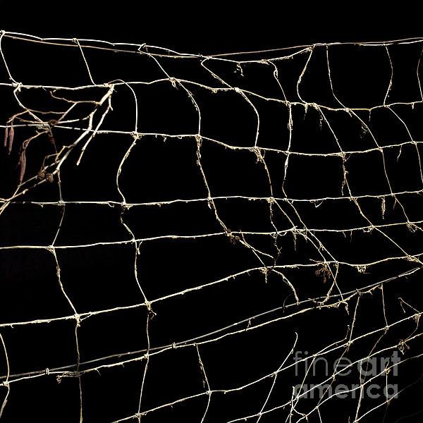 Barbed Wire Print by Bernard Jaubert