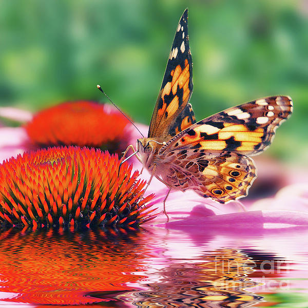 Butterfly Print by Angela Doelling AD DESIGN Photo and PhotoArt