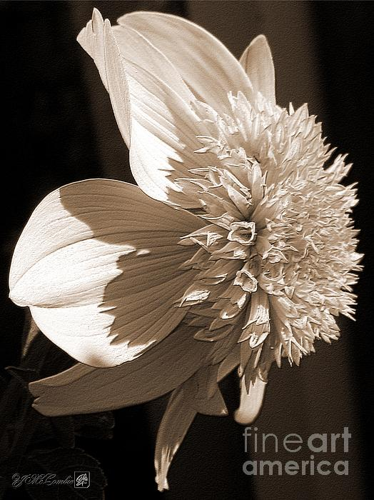 Dahlia Named Platinum Blonde Print by J McCombie