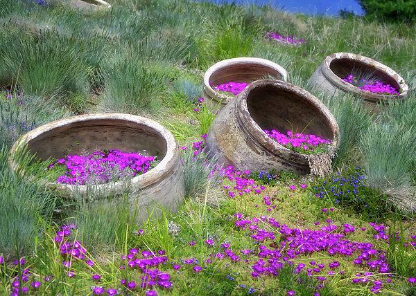 Joan Carroll - Desert Flowers