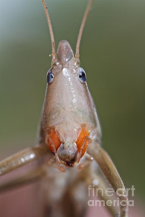Do I Bug You Print by Gary Bridger
