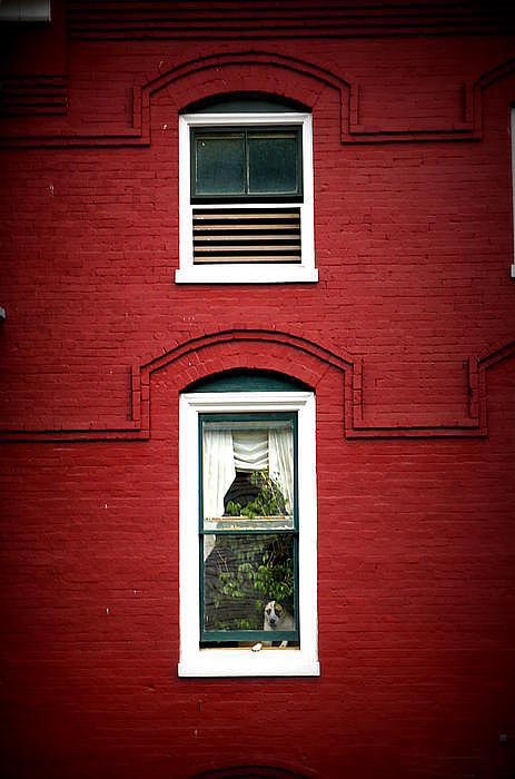 Doggie In The Window Print by Laurie Perry