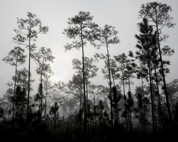 Early Morning Fog Landscape Print by Rudy Umans