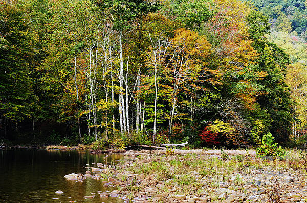 Fall Color River Print by Thomas R Fletcher