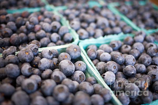 Fresh Blueberries Print by Edward Fielding