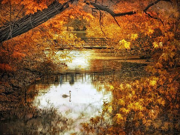 Jessica Jenney - Golden Pond