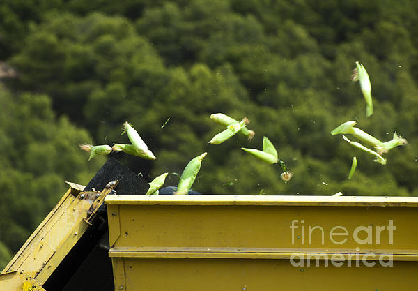 Harvester Reaps Corn Print by Deyan Georgiev