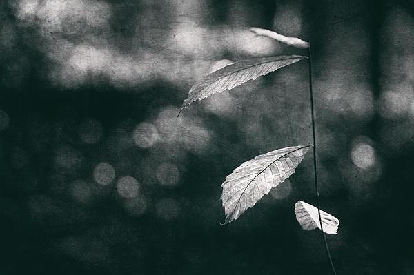 Leaves Print by Yavuz Sariyildiz