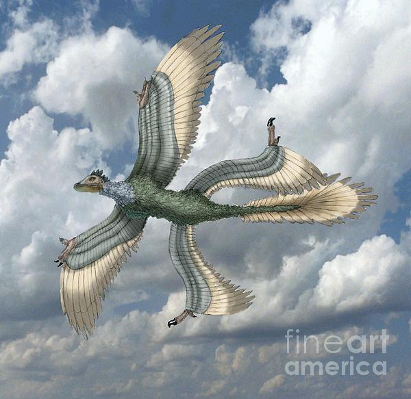 Microraptor Print by Spencer Sutton