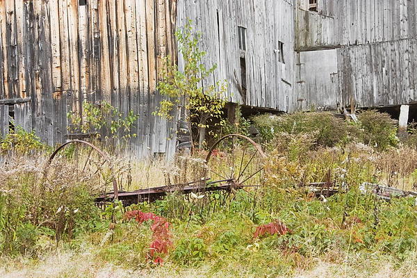 Old Barn In Fall Maine Print by Keith Webber Jr