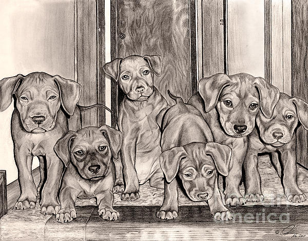 Puppies In The Hallway Print by Omoro Rahim