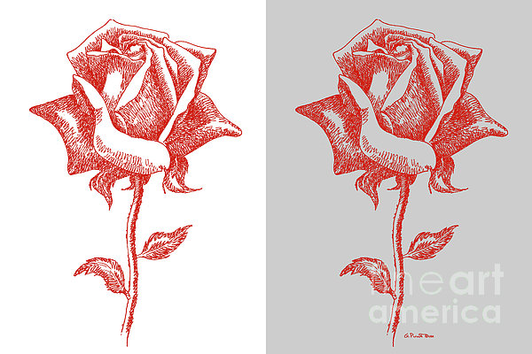 2 Red Roses Poster Print by Gordon Punt