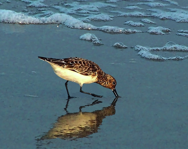 Reflection At Sunset Print by Sandi OReilly