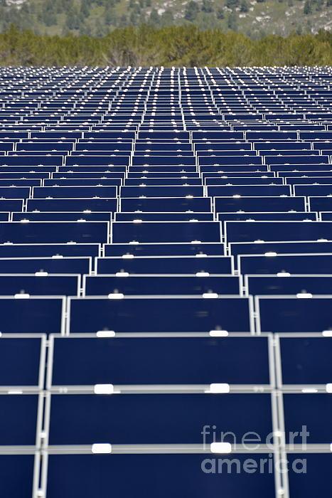 Solar Panels In Farm Print by Sami Sarkis