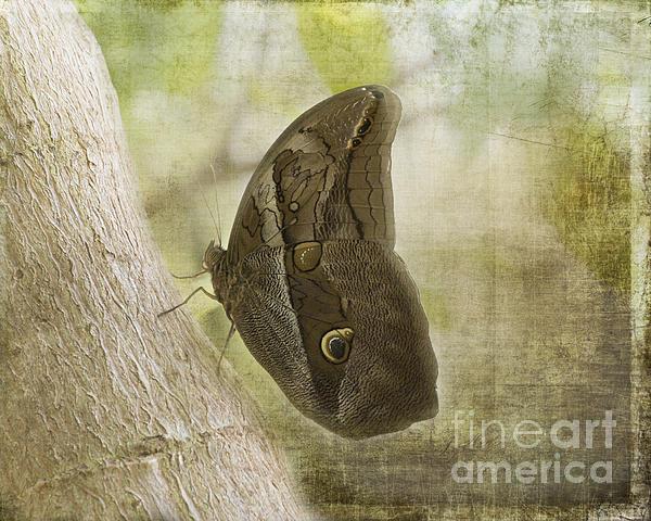 Tawny Owl Butterfly #2 Print by TN Fairey