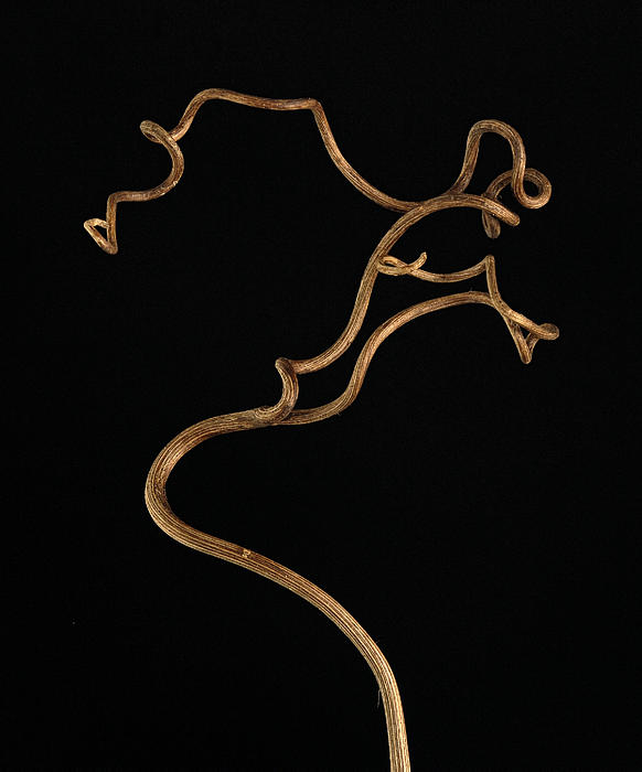 Twisty Nature Print by Claudio Bacinello